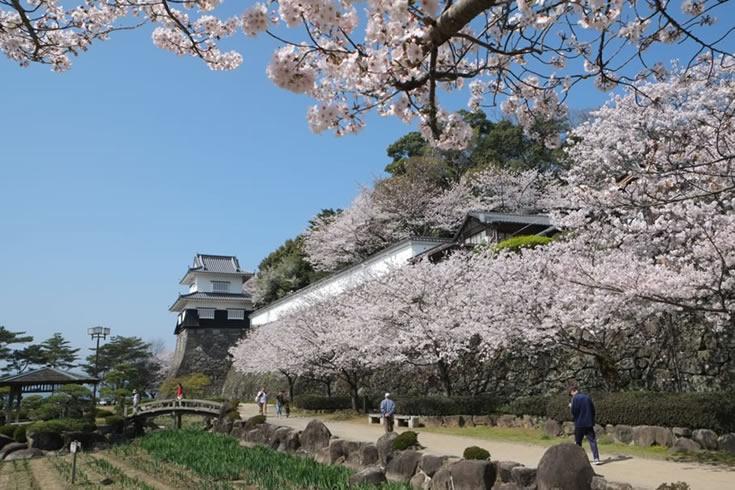 http://e-oomura.jp/img/entry/sakura-01.jpg